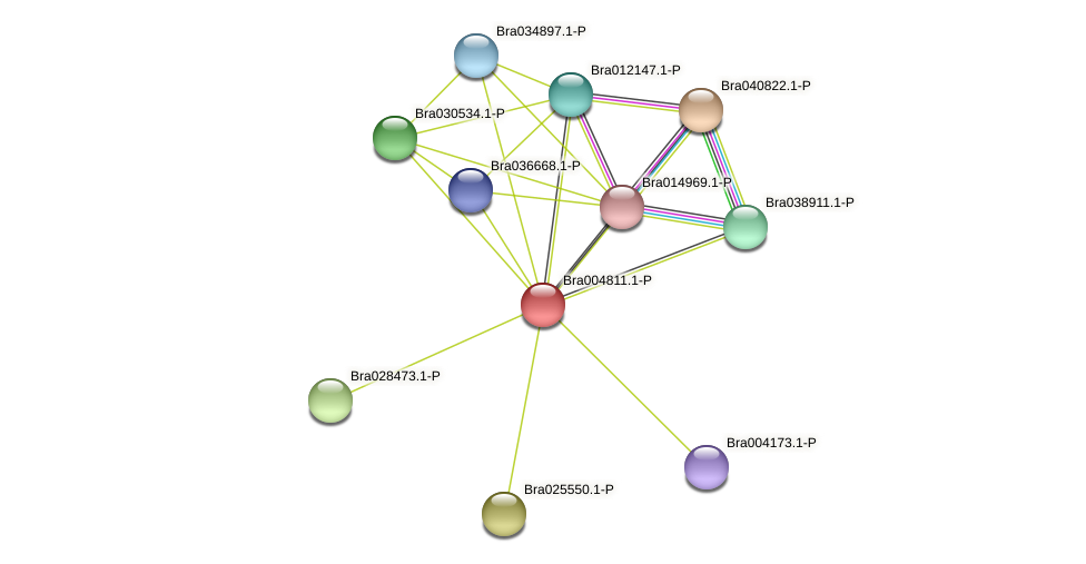 Bra004811 protein (Brassica rapa) - STRING interaction network