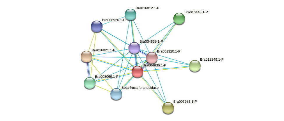Bra004836 protein (Brassica rapa) - STRING interaction network