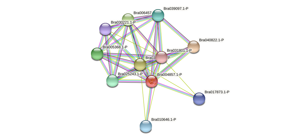 Bra004857 protein (Brassica rapa) - STRING interaction network
