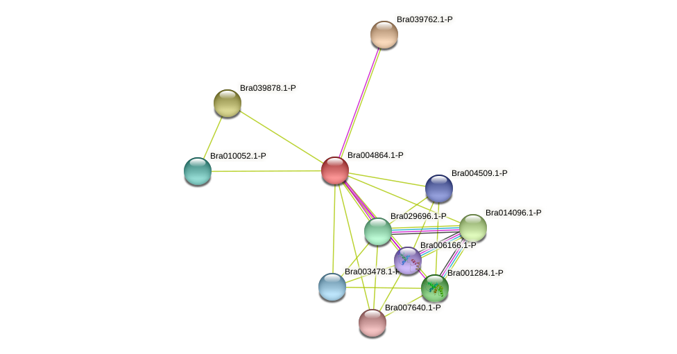 Bra004864 protein (Brassica rapa) - STRING interaction network