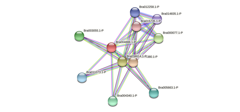 Bra004888 protein (Brassica rapa) - STRING interaction network