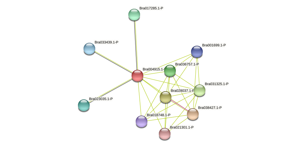 Bra004915 protein (Brassica rapa) - STRING interaction network