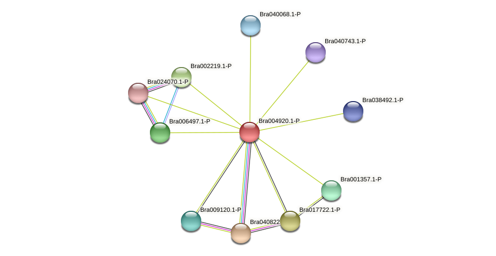 Bra004920 protein (Brassica rapa) - STRING interaction network