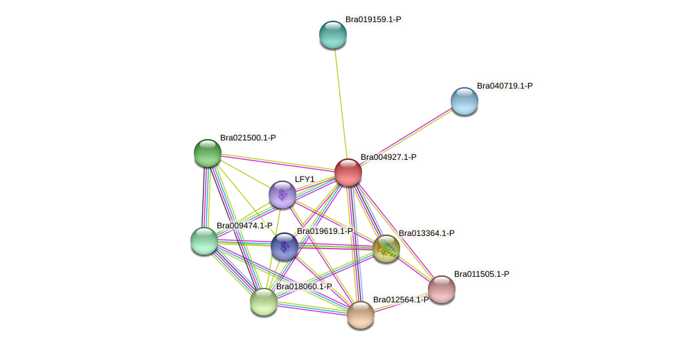 Bra004927 protein (Brassica rapa) - STRING interaction network