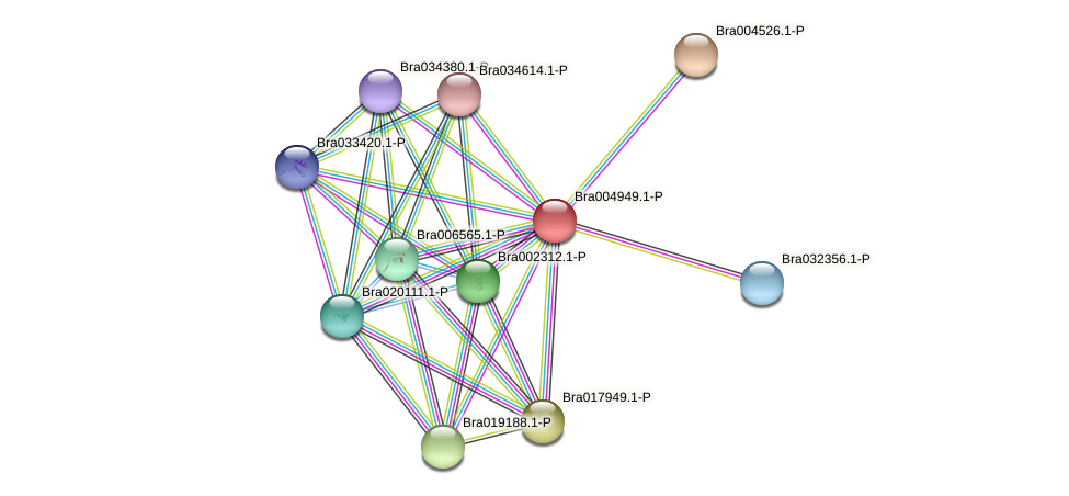 Bra004949 protein (Brassica rapa) - STRING interaction network