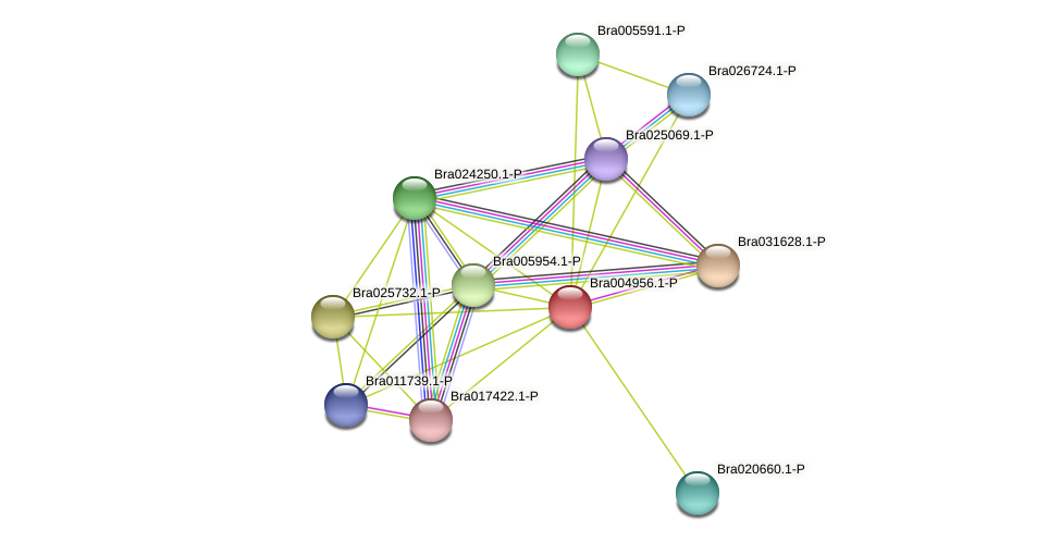 Bra004956 protein (Brassica rapa) - STRING interaction network