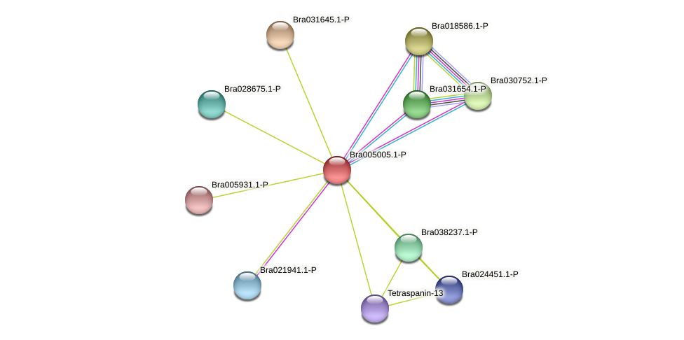Bra005005 protein (Brassica rapa) - STRING interaction network