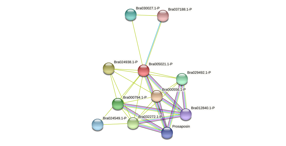 Bra005021 protein (Brassica rapa) - STRING interaction network
