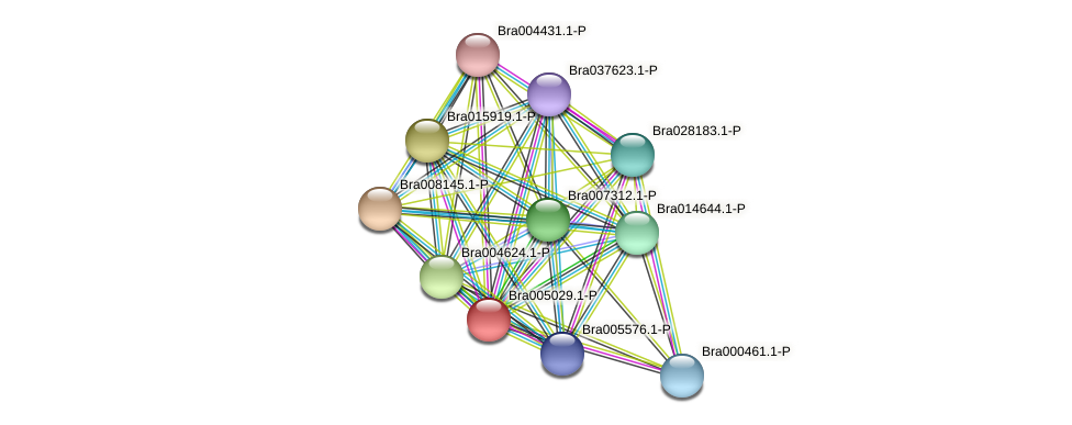 Bra005029 protein (Brassica rapa) - STRING interaction network