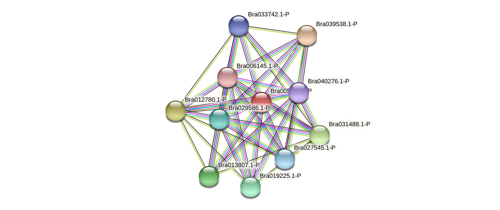 Bra005031 protein (Brassica rapa) - STRING interaction network