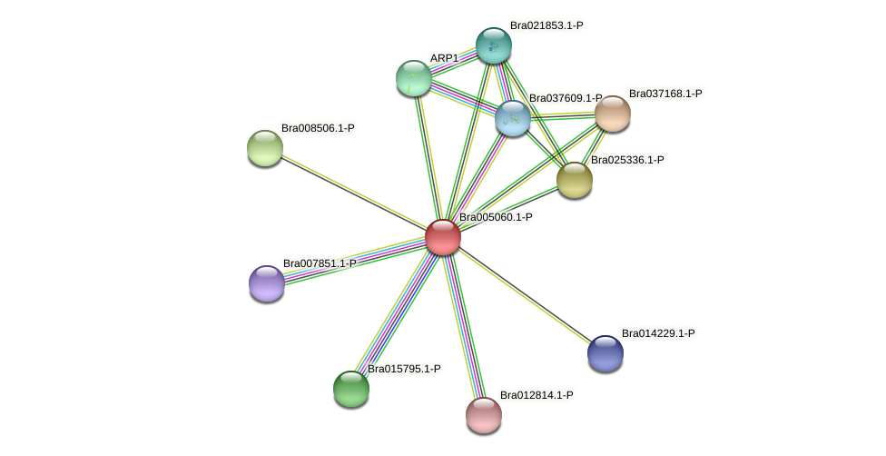 Bra005060 protein (Brassica rapa) - STRING interaction network