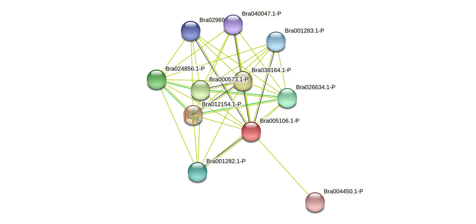 Bra005106 protein (Brassica rapa) - STRING interaction network