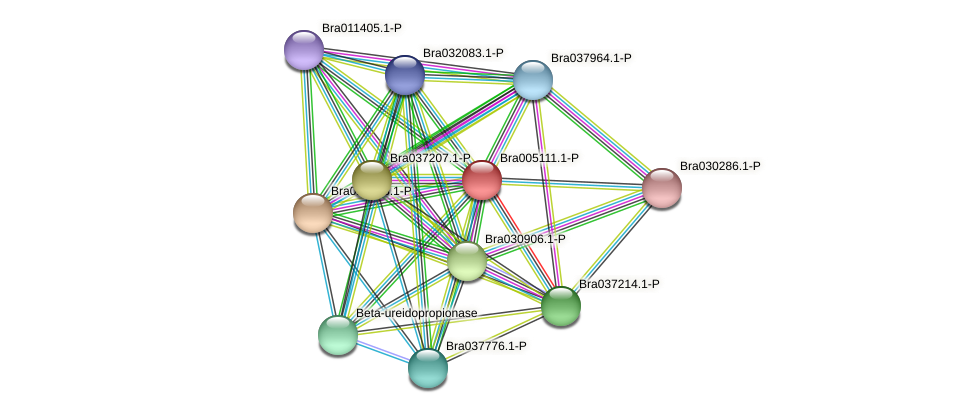 Bra005111 protein (Brassica rapa) - STRING interaction network