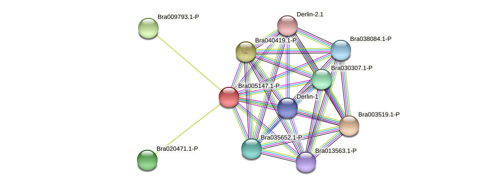 Bra005147 protein (Brassica rapa) - STRING interaction network