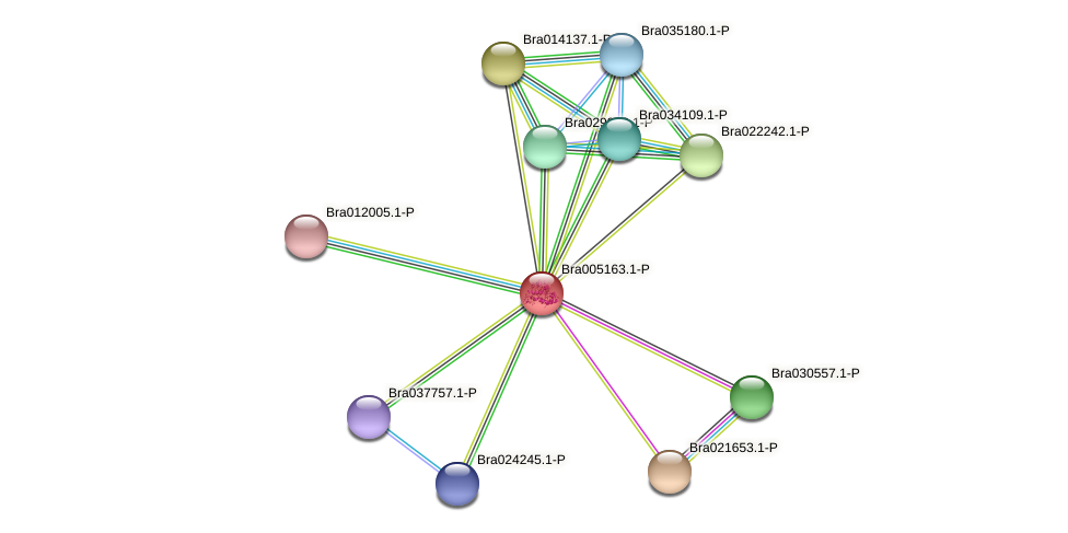 Bra005163 protein (Brassica rapa) - STRING interaction network