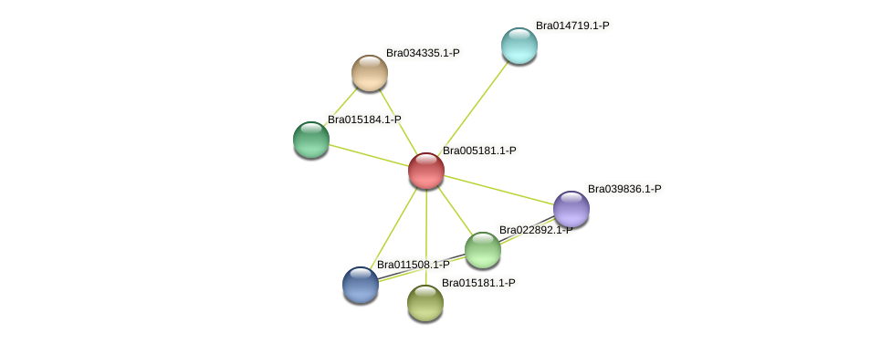 Bra005181 protein (Brassica rapa) - STRING interaction network
