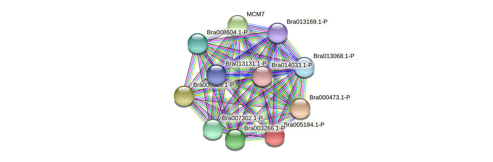 Bra005184 protein (Brassica rapa) - STRING interaction network