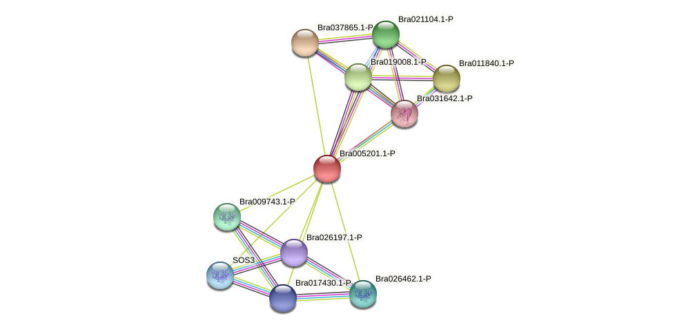 Bra005201 protein (Brassica rapa) - STRING interaction network