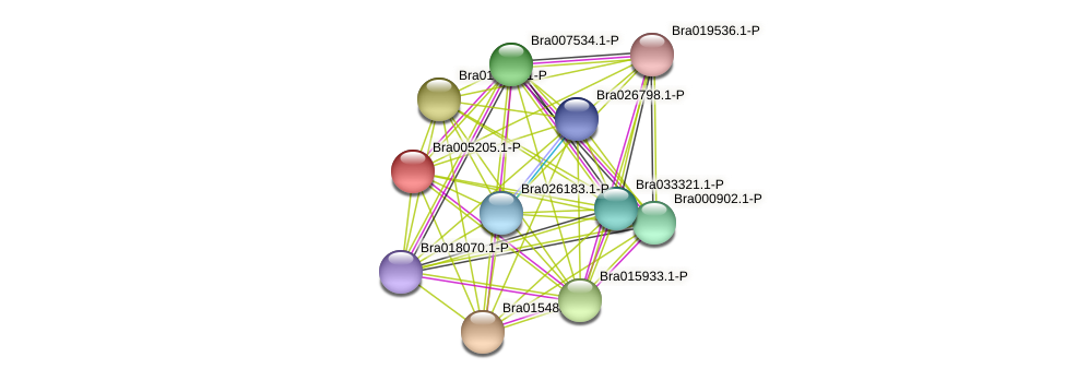 Bra005205 protein (Brassica rapa) - STRING interaction network