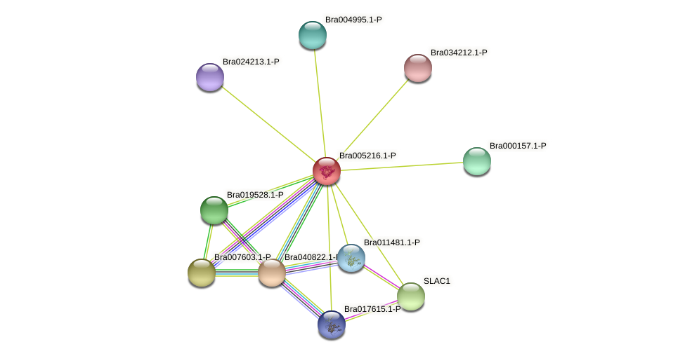 Bra005216 protein (Brassica rapa) - STRING interaction network