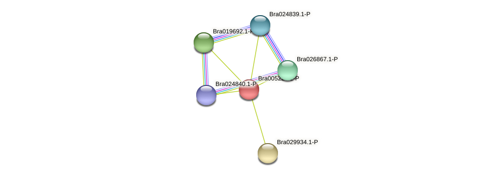 Bra005223 protein (Brassica rapa) - STRING interaction network
