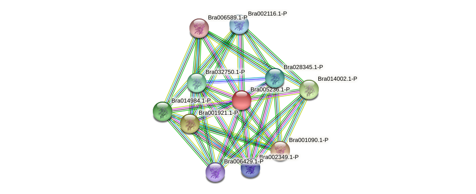 Bra005236 protein (Brassica rapa) - STRING interaction network