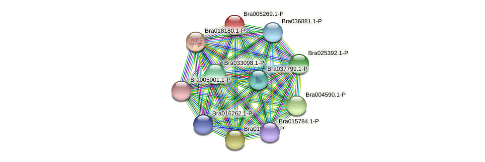 Bra005269 protein (Brassica rapa) - STRING interaction network