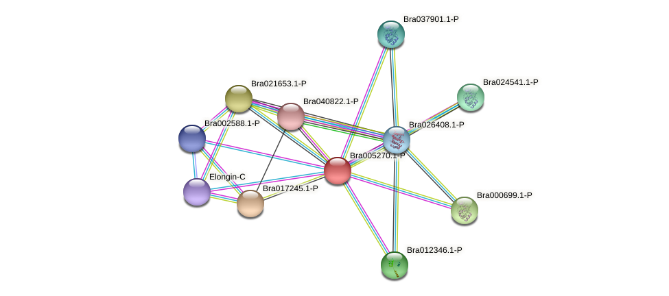 Bra005270 protein (Brassica rapa) - STRING interaction network