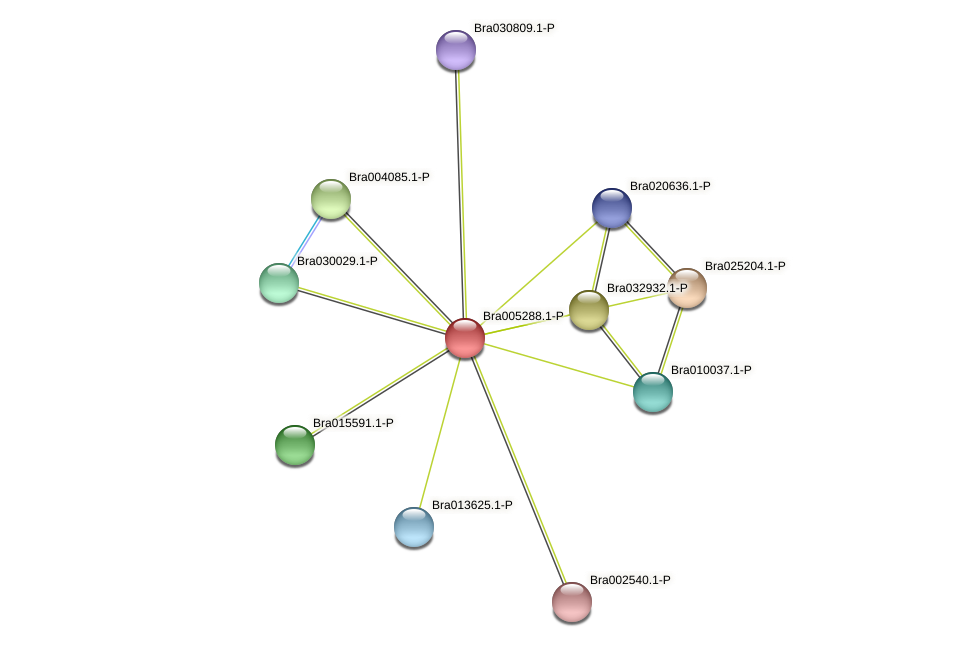 Bra005288 protein (Brassica rapa) - STRING interaction network