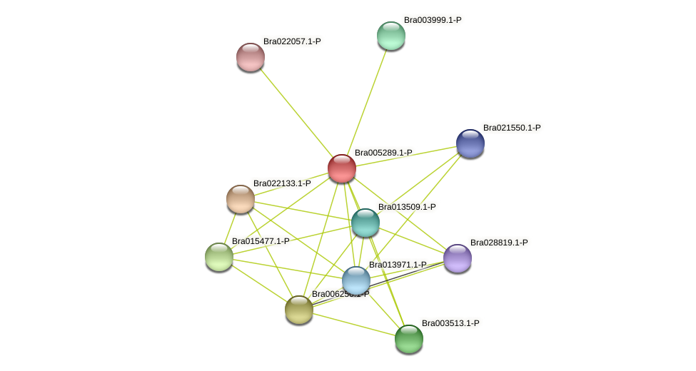 Bra005289 protein (Brassica rapa) - STRING interaction network