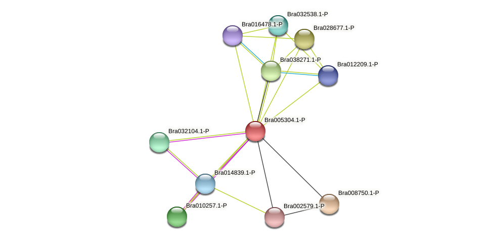 Bra005304 protein (Brassica rapa) - STRING interaction network