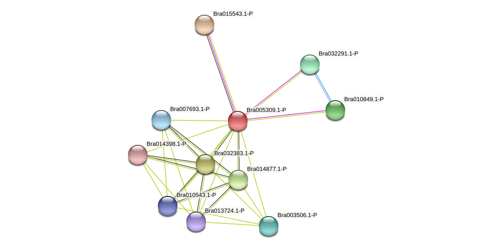Bra005309 protein (Brassica rapa) - STRING interaction network