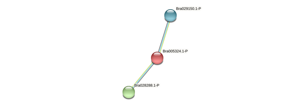 Bra005324 protein (Brassica rapa) - STRING interaction network