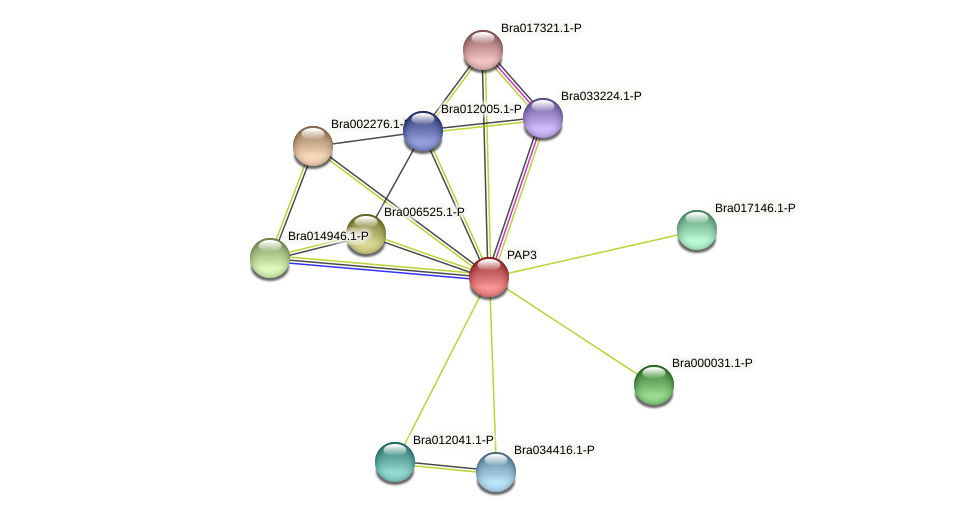 Bra005337 protein (Brassica rapa) - STRING interaction network