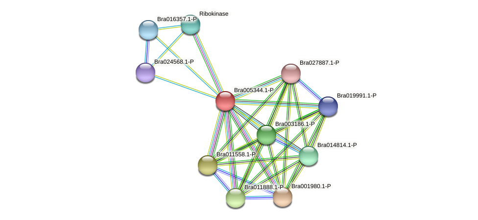 Bra005344 protein (Brassica rapa) - STRING interaction network