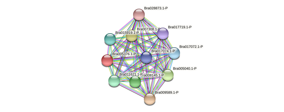 Bra005376 protein (Brassica rapa) - STRING interaction network