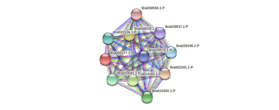 Bra005377 protein (Brassica rapa) - STRING interaction network