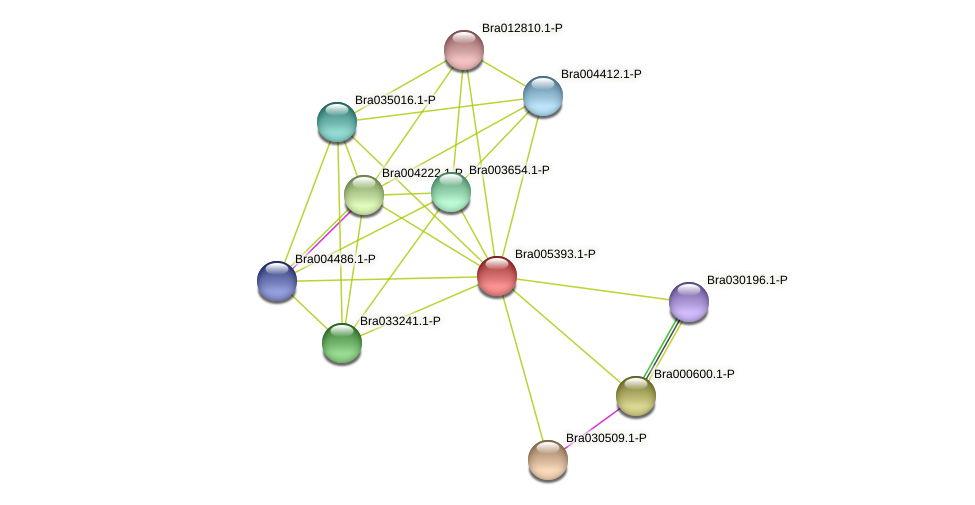Bra005393 protein (Brassica rapa) - STRING interaction network