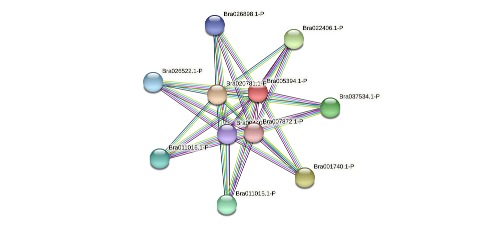 Bra005394 protein (Brassica rapa) - STRING interaction network