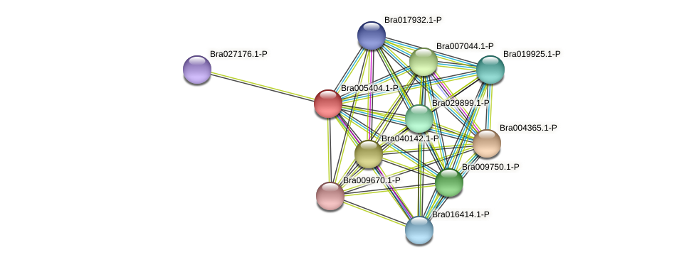 Bra005404 protein (Brassica rapa) - STRING interaction network