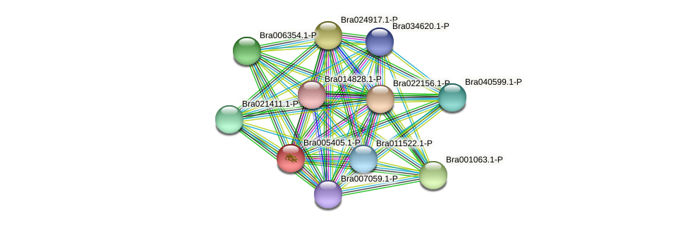 Bra005405 protein (Brassica rapa) - STRING interaction network
