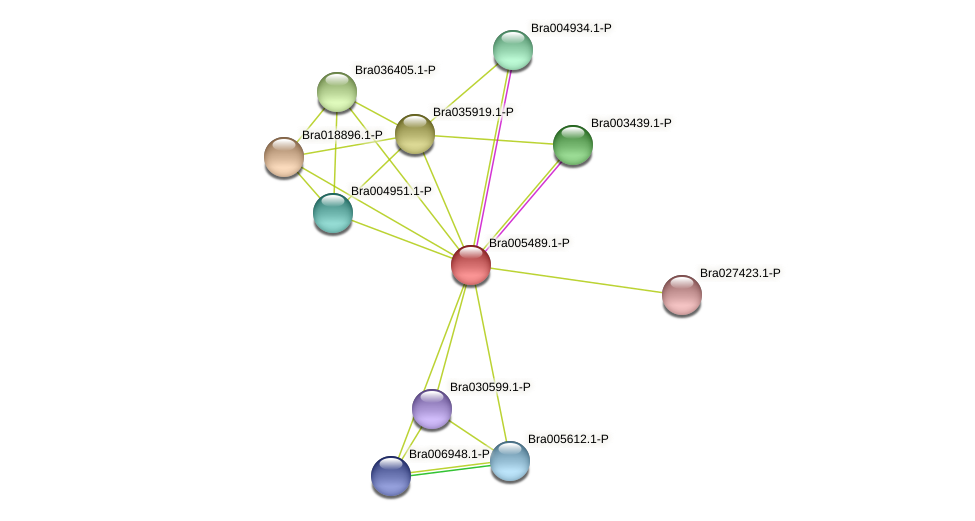 Bra005489 protein (Brassica rapa) - STRING interaction network