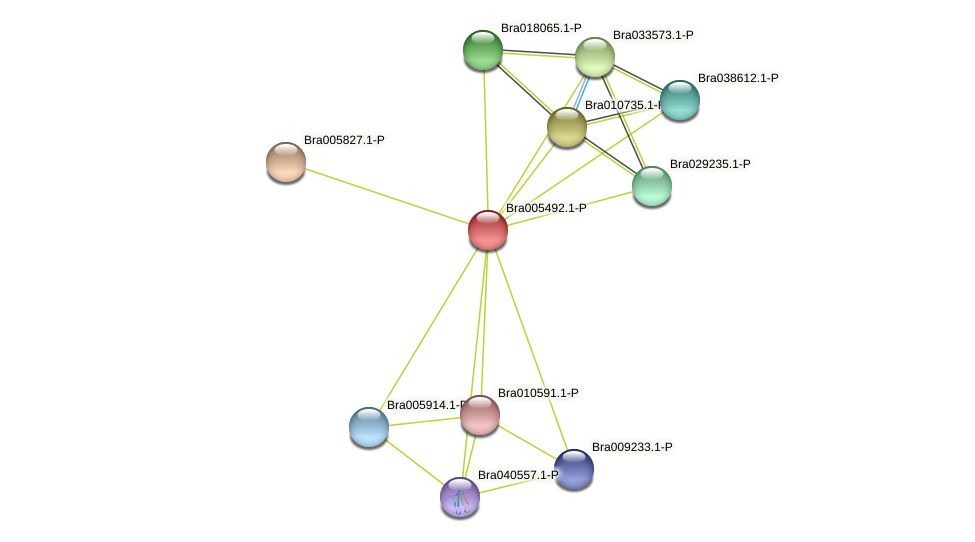 Bra005492 protein (Brassica rapa) - STRING interaction network