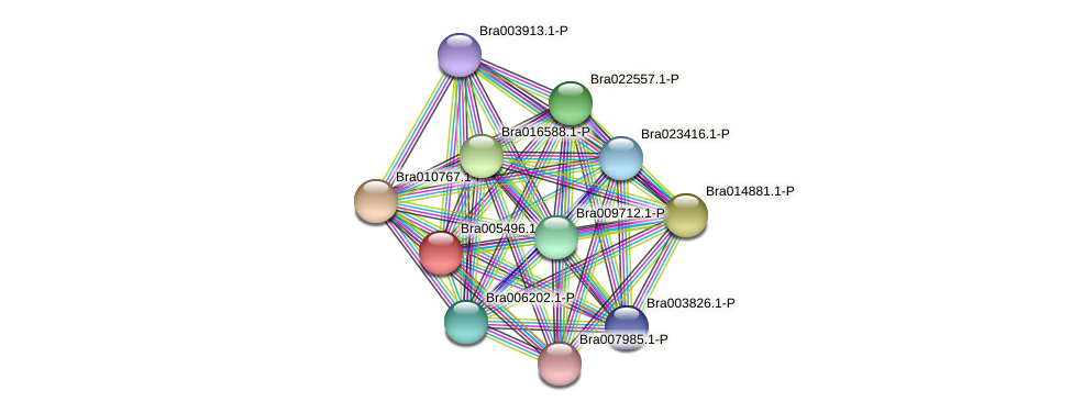 Bra005496 protein (Brassica rapa) - STRING interaction network