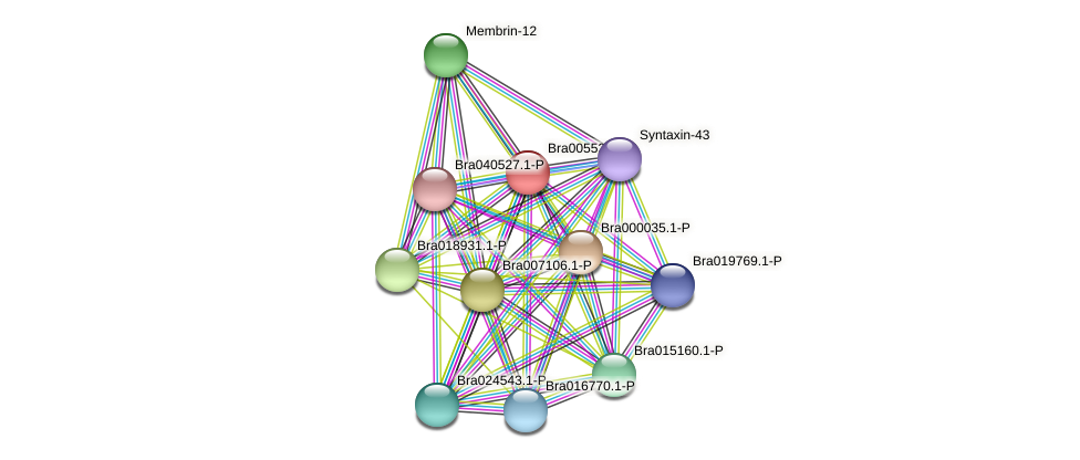 Bra005523 protein (Brassica rapa) - STRING interaction network