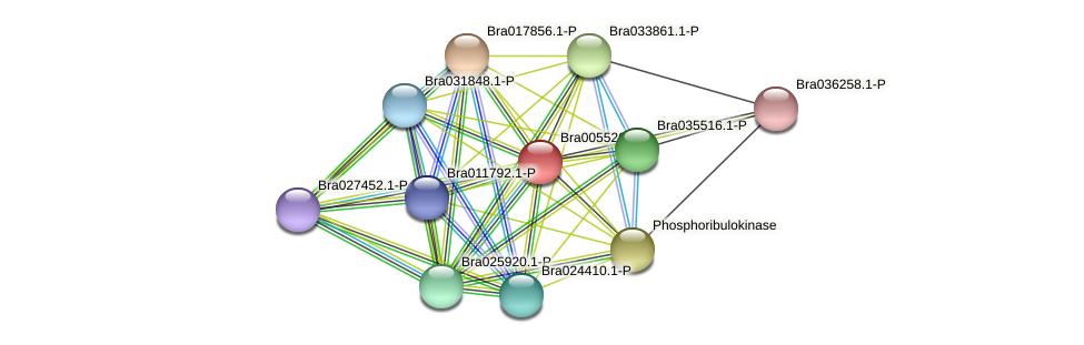 Bra005526 protein (Brassica rapa) - STRING interaction network
