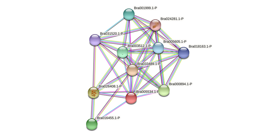 Bra005534 protein (Brassica rapa) - STRING interaction network