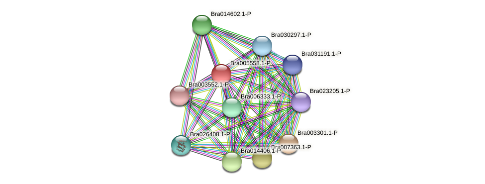 Bra005558 protein (Brassica rapa) - STRING interaction network