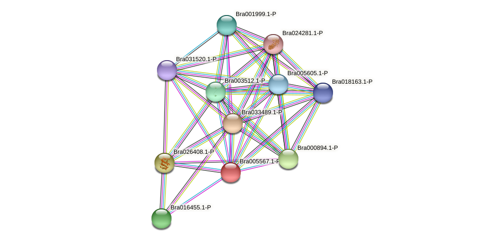 Bra005567 protein (Brassica rapa) - STRING interaction network