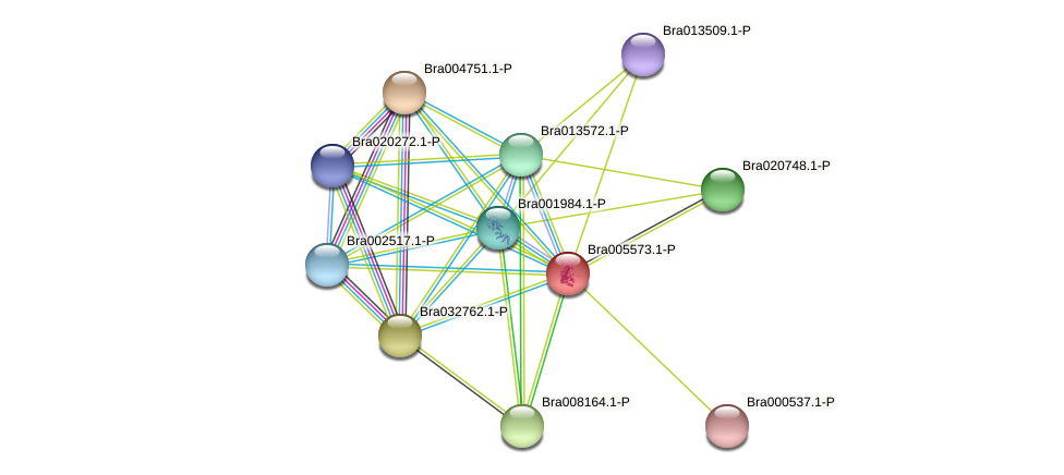 Bra005573 protein (Brassica rapa) - STRING interaction network
